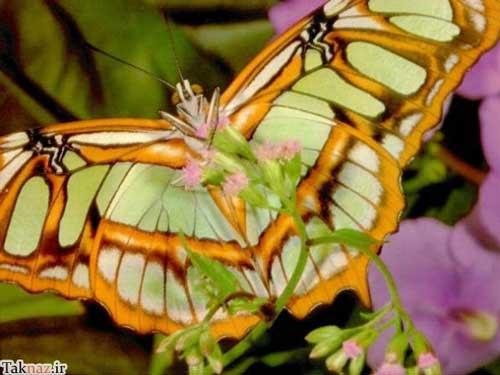 تصاویر زیبا و دیدنی از آفرینش خارق العاده پروانه ها