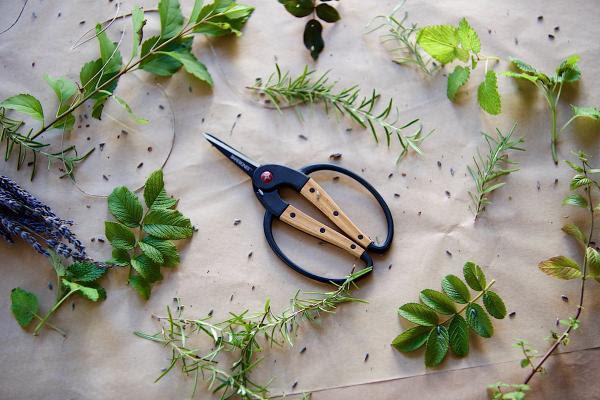 Foraging Scissors