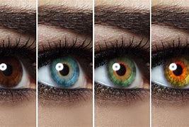 different coloured eyes.jpg