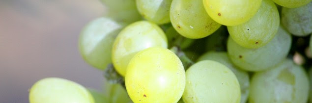 Pour le vignoble, la hausse des prix du raisin est évidemment une bonne nouvelle mais elle cache aussi un risque d'intégration encore plus profonde de la production de raisins.
