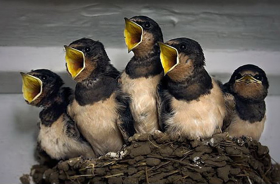 birds via kath (2)