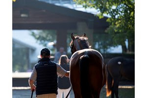A yearling is led to the sales pavilion at Keeneland