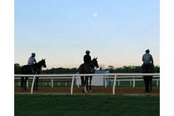 Horses take a moment in the early morning at Fair Hill Training Center
