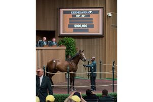 A Cairo Prince colt sells for $900,000 during the 2017 Keeneland September yearling sale