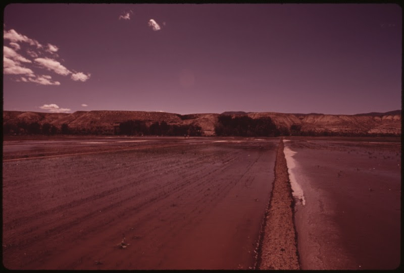 File:A FIELD OF YOUNG ALFALFA AND OATS ON THE PYRAMID LAKE INDIAN RESERVATION. FIELD IS IRRIGATED BY MECHANICAL FLOODING - NARA - 553652.tif