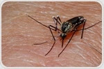 UC Scientist receives NIH grant for developing new malaria therapeutic strategies