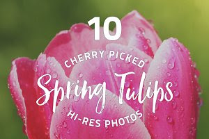 Spring Tulips - photo pack