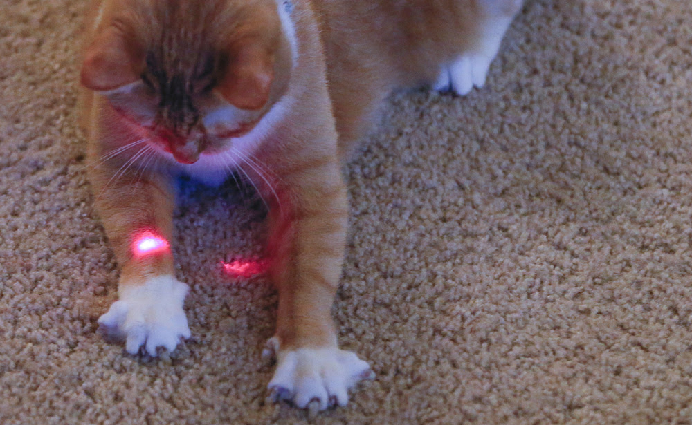 How does this woman using a gun's laser as a cat toy shoot her friend?