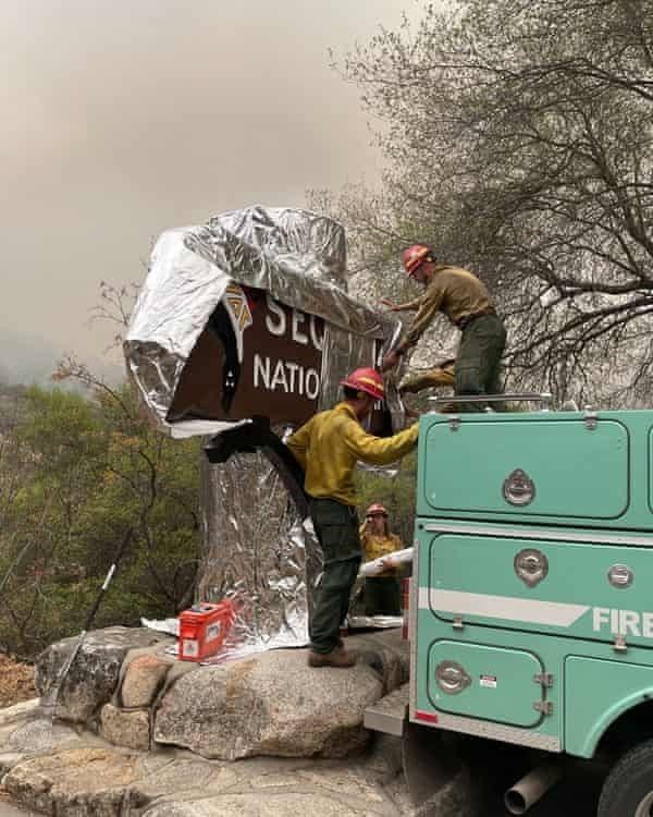 Bomberos protegen al árbol historico, foto National Park Service-AFP-Getty Images