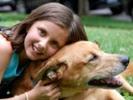Genetic similarities of bone cancer in dogs, children identified