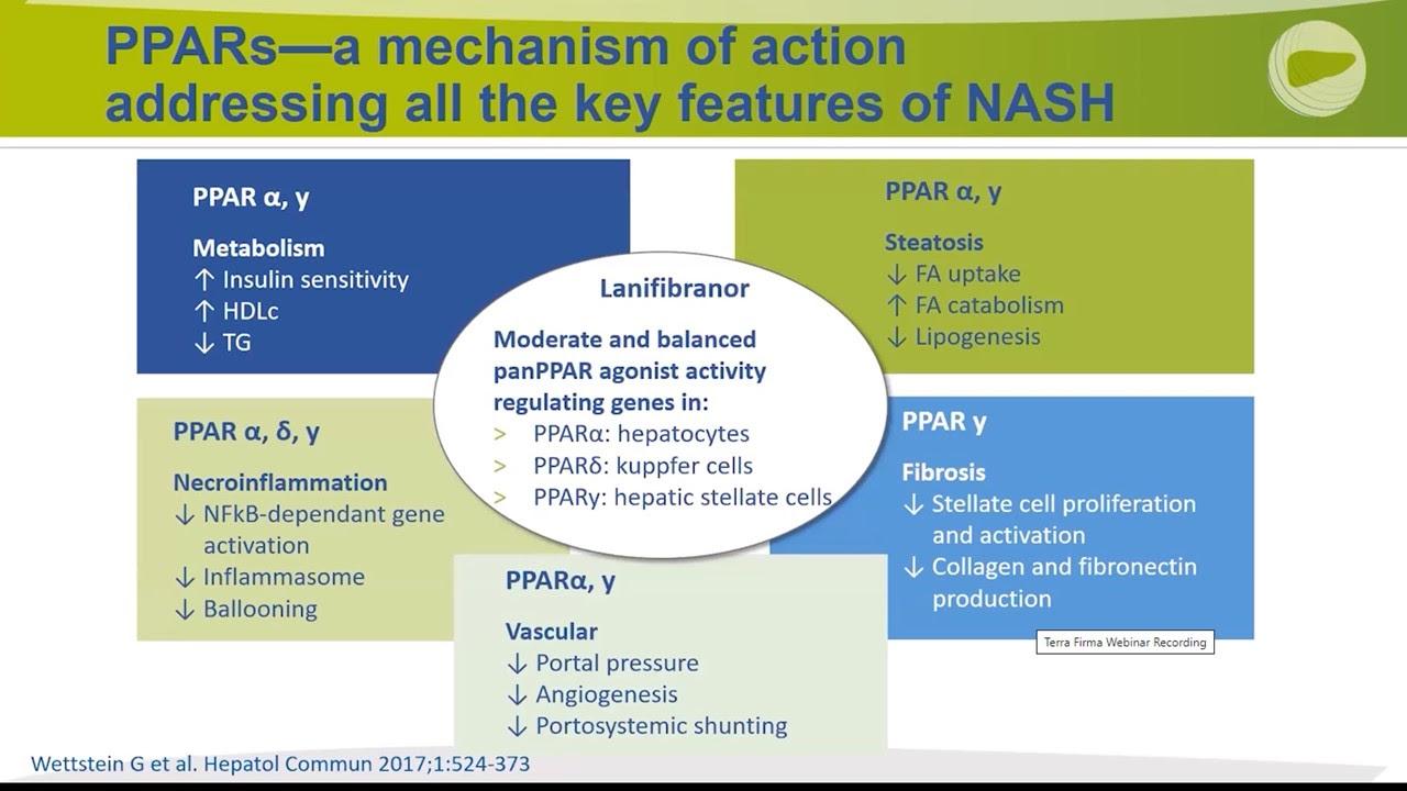 PPAR_mechanisms_of_action.jpg