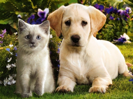 cat and dog20