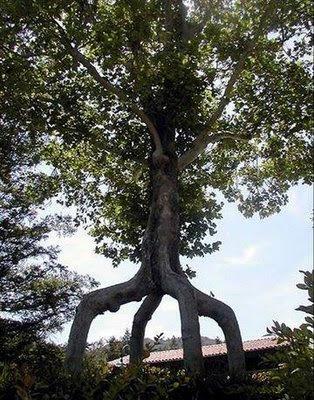 trees, 16