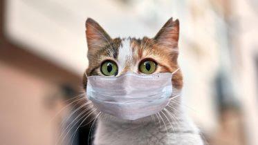 Cat COVID-19 Mask
