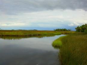 Estuarine Habitat