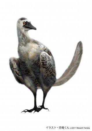 始祖鳥アーケオプテリクス(イメージイラスト)