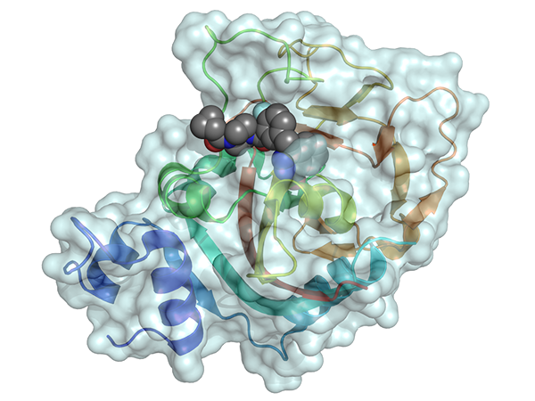 Model of the drug olaparib binding to part of the PARP1 enzyme in a cancer cell, preventing the enzyme from repairing damaged DNA. Credit: Dawicki-McKenna JM, Molecular Cell 2015. doi:10.1016/j.molcel.2015.10.013