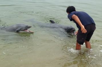 《今年初開催》浅瀬でイルカ餌やり体験