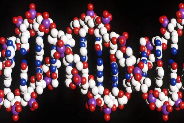 Έφτιαξαν βακτήριο με έξι «γράμματα» στο DNA