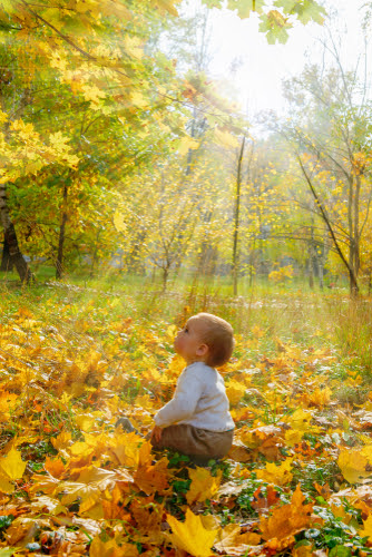 Golden autumn is here. A  ute baby boy sitting in the autumn park. Sun casting beautiful rays of light through the yellow leaves.