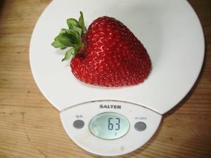 Perpetual Strawberry - 'Malling Opal' - 63g!