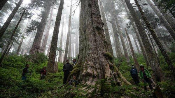 Cuenca de Fairy Creek en Vancouver. Foto de Will O´Connell