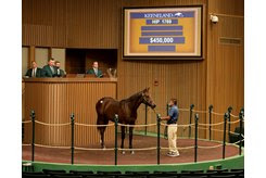 The Unified colt consigned as Hip 1769 at the Keeneland September Sale