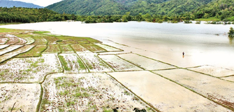 Paddy fields under flood water