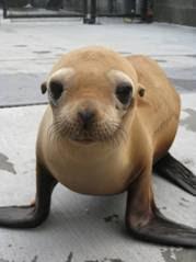 Seal Adam Ratner
