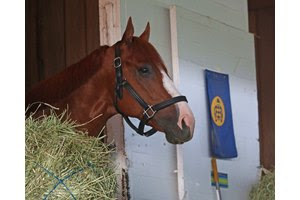 Justify the morning after his Kentucky Derby win at Churchill Downs