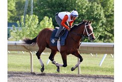 Maximum Security breezes May 22 under exercise rider Edelberto Rivas at Monmouth Park