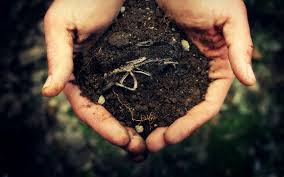 Image result for hands holding soil