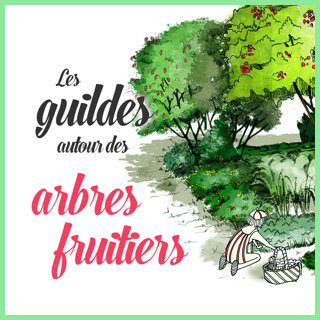 Illustration de la fiche technique « guilde des arbres fruitiers »