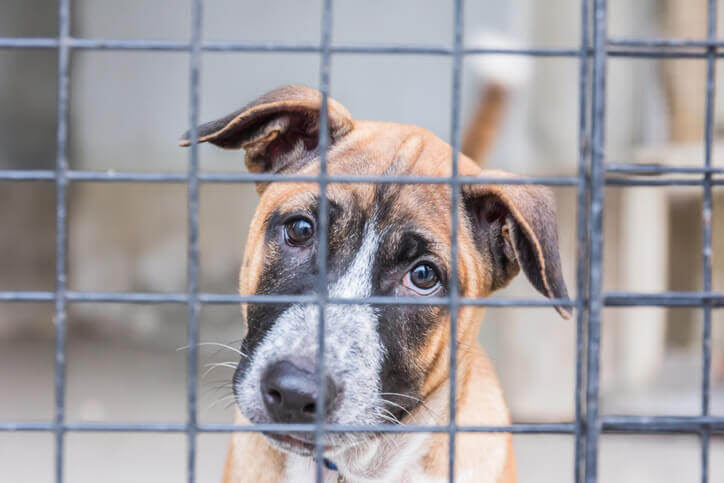 Love on a Shelter Animal