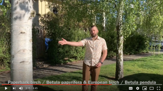 Tree Walk video screen shot