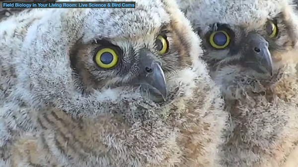 Watch a 3-minute video about a new Bird Cams research project.