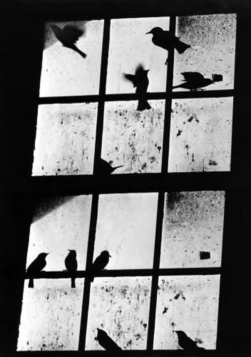 A. Aubrey Bodine, 10 Birds, 1950s