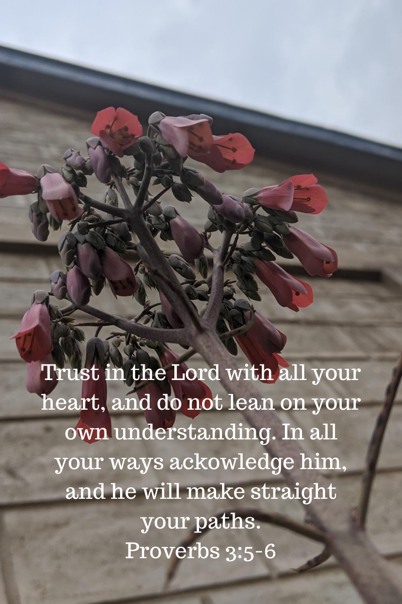 Trust in the Lord with all your heart, and do not lean on your own understanding. In all your ways ackowledge him, and he will make straight your paths. Proverbs 3_5-6.png