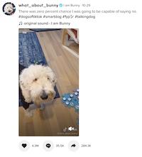 tik tok smart dog