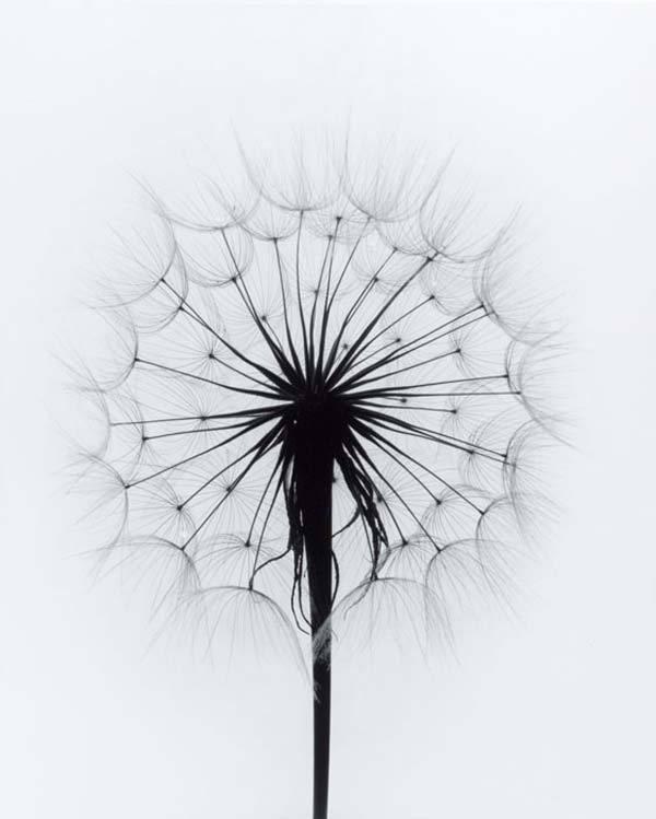 Paul-Caponigro-flowers-12