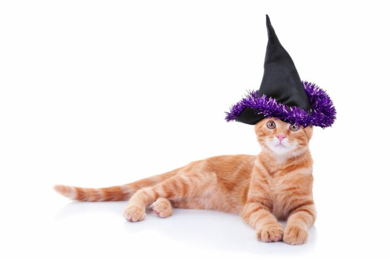 cat_witch_hat.jpg