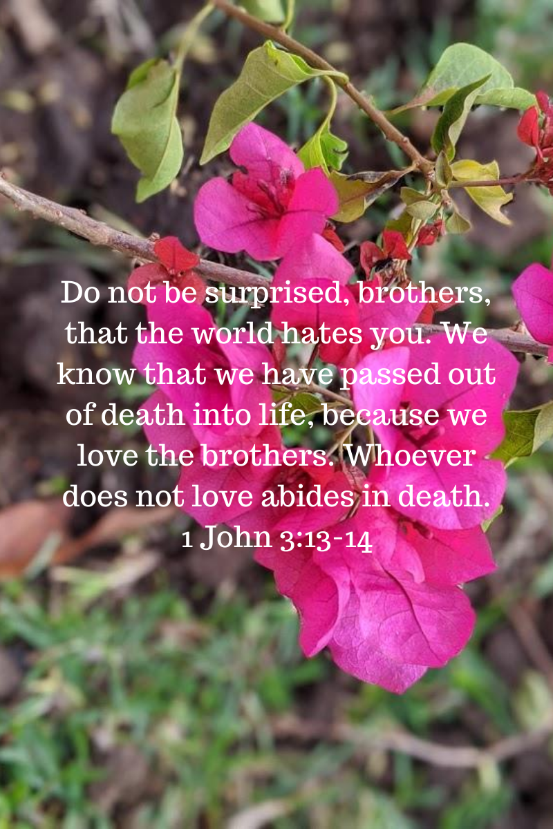1598263961283_Do not be surprised, brothers, that the world hates you. We know that we have passed out of death into life, because we love the brothers. Whoever does not love abides in death. 1 John 3_13-14.png