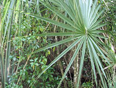 Go Native When Buying Plants in South Florida
