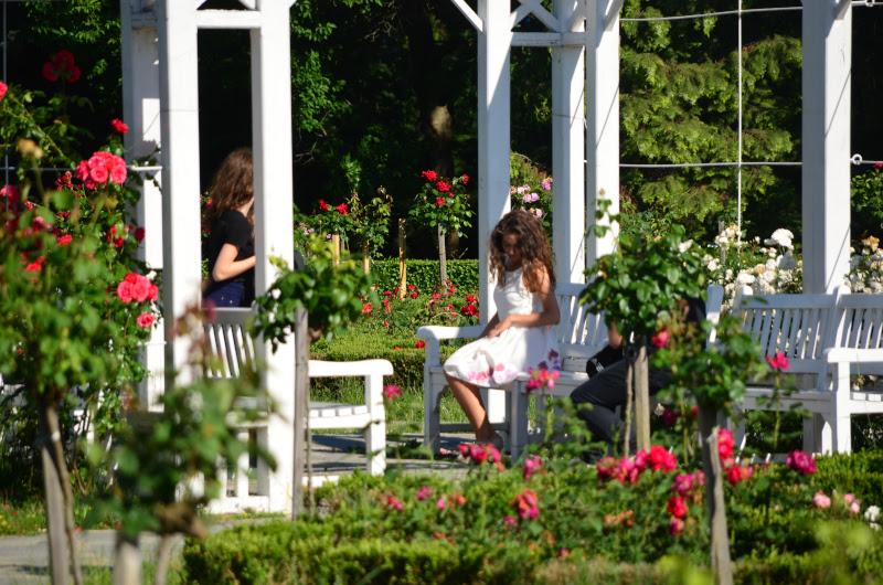 parcul-rozelor-din-timisoara