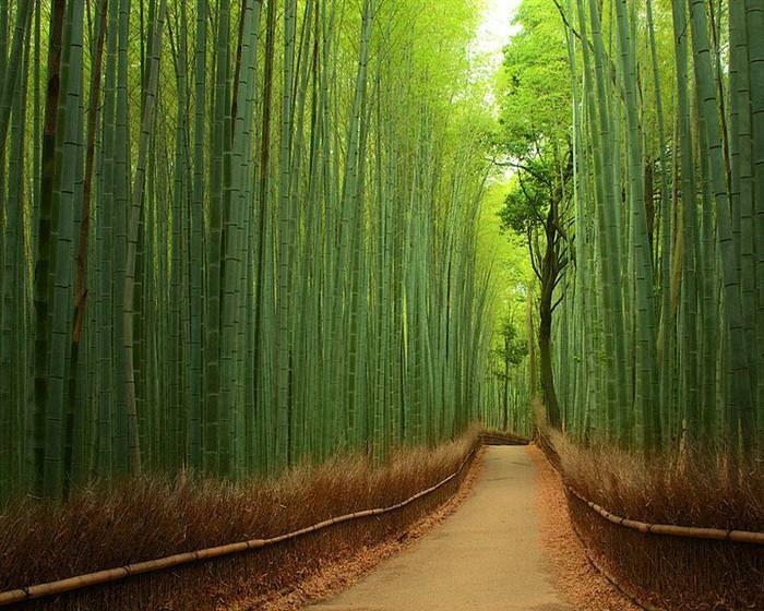 beautiful tree tunnels
