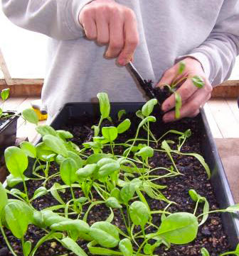 Veggie gardening classes
