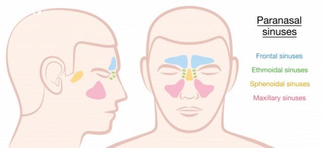 Khoang xoang mũi,cơ thể con người,sự tiến hóa