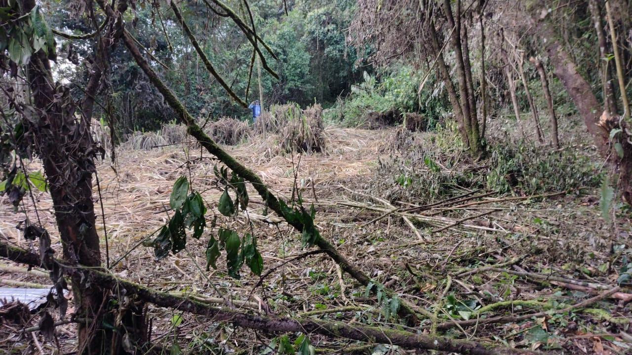 Dos personas capturadas por causar daños en área protegida de Barbas – Bremen - Noticias de Colombia