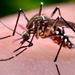 16744-close-up-of-a-mosquito-feeding-on-blood-pv-1