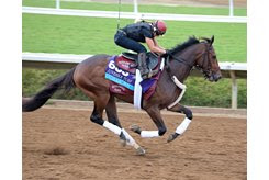 Catholic Boy training on the Del Mar main track ahead of the Breeders' Cup